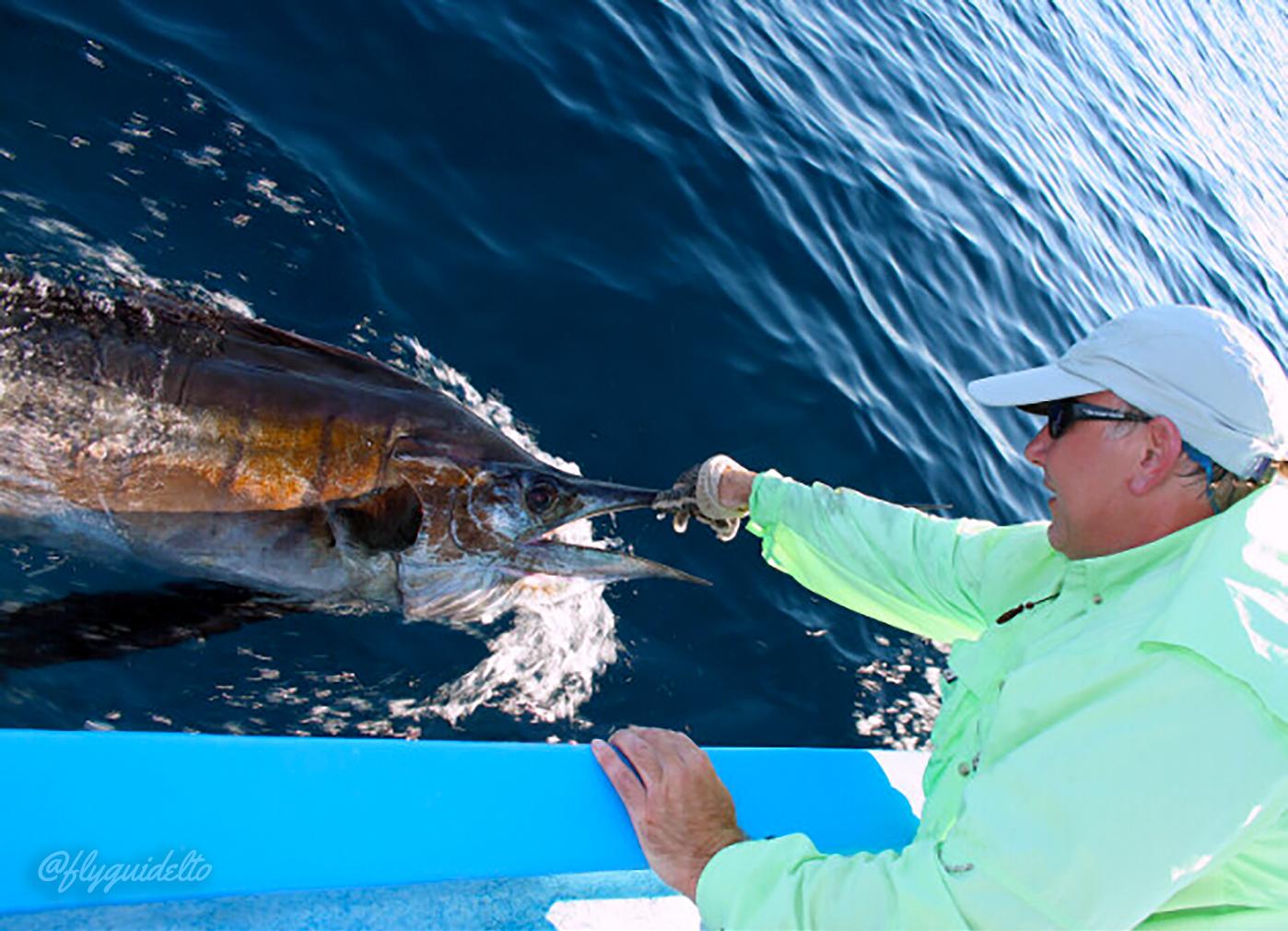 Marlin and Sailfish