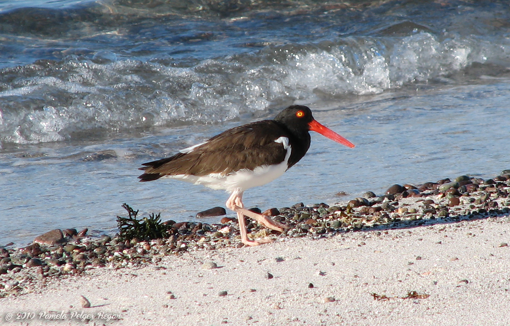 Loreto Birds